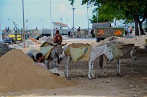En Lamu hay 30.000 personas, 15.000 burros y solo 2 coches.