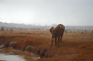 elburroviajero.com2 elefante