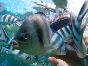 Selfish. QUe es un selfie con un pez. El de la mascara soy yo